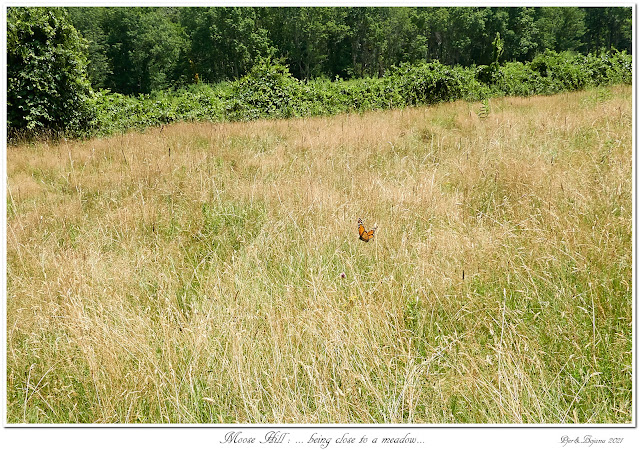 Moose Hill: ... being close to a meadow...