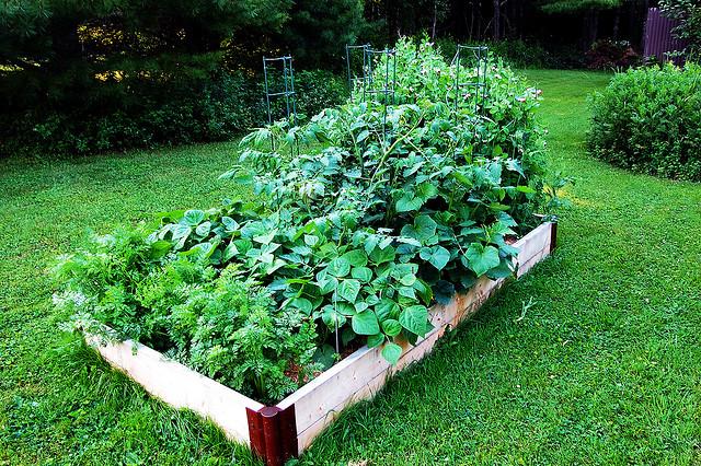 aquela vontade de ampliar a quantidade de espécies de hortaliças mas