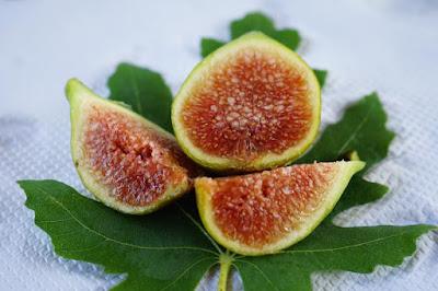 LUNGA DE AGUSTO Figs