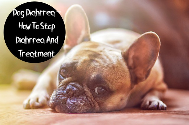Dog Diahrrea - How To Stop Diahrrea And Treatment