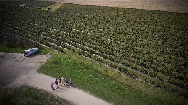 La cules de zmeura si afine, Transylvania Berry; Berivoi, Brasov