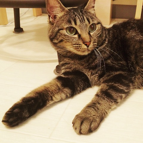 美人猫その2