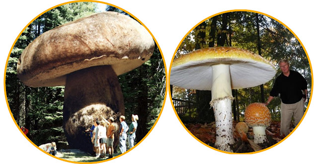 Pict: A fungi specimen may be largely hidden underground and cover large areas.