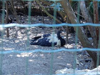 Parco Gallorose(ガッロロゼ公園)の鳥