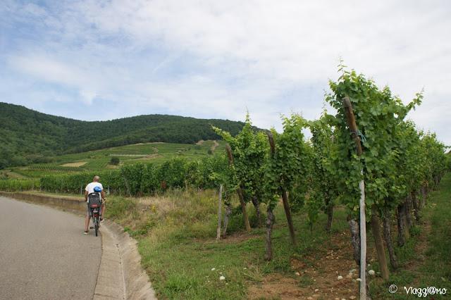 La Route des Vins d'Alsace permette di raggiungere splendidi borghi