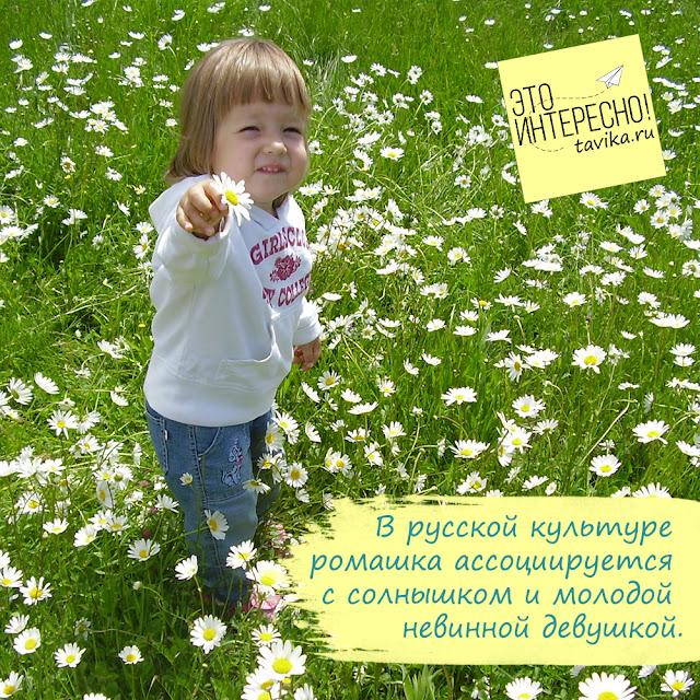 ромашка - занятие для детей
