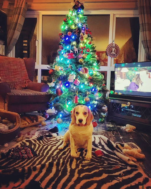 Messy dog with her toys in front a christmas tree, Mandy Charlton Photography, newcastle