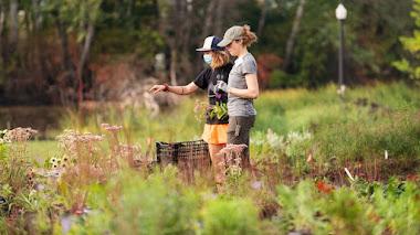 Plantación en Belle Isle, el nuevo jardín de Piet Oudolf en Detroit