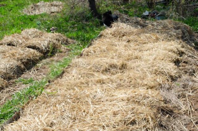 Hugelkultur type of permaculture farming