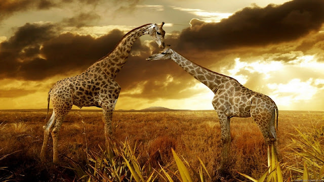 Beautiful animals wallpaper & backgrounds #70