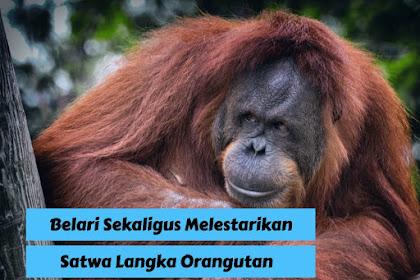 Melestarikan Orangutan Lewat Event oRUNgutan 2019 Bersama Sriwijaya Air