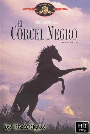 El corcel negro 1080p Latino
