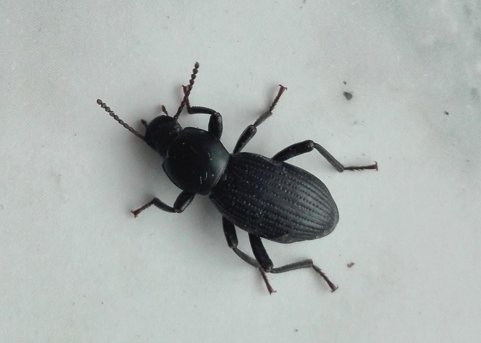 Image of escarabajos pequeos en casa los m dicos alertan - Como deshacerse de la mala suerte ...