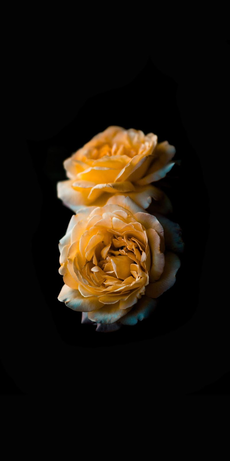 Rose AMOLED