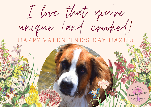 Paws For Reaction- Your funny Valentine: February pets featured in a Valentine from their pet parents