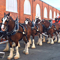 New England Fall Events_The Big E_Clydesdales on Parade