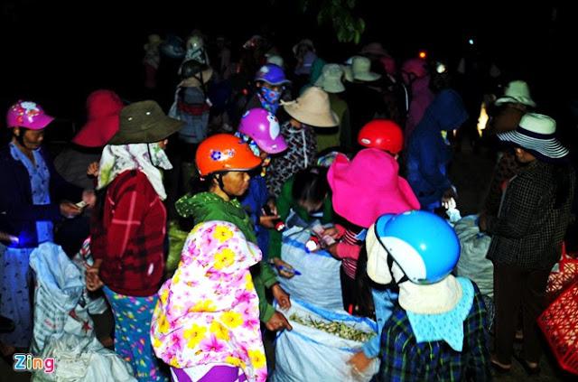 Chợ tỏi 4h sáng trên đảo Lý Sơn - Hình 1