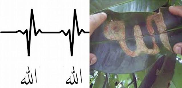 Allahu Akbar! Tercengang dengan Fenomena Ini, Ilmuwan Barat Langsung Masuk Islam