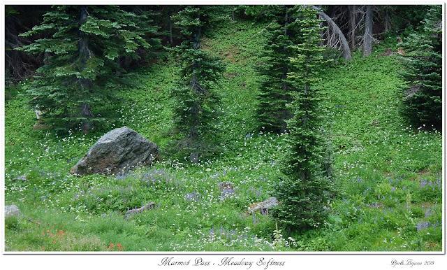 Marmot Pass: Meadowy Softness