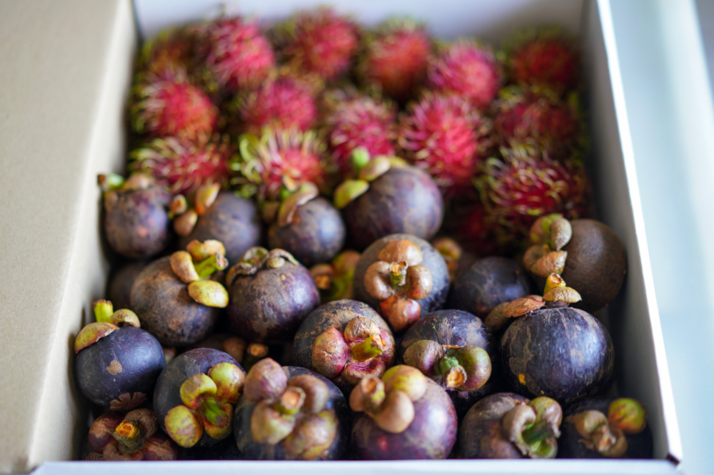 If Only: Mangosteen Boxes
