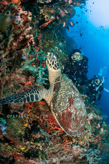 Learn Scuba, Underwater Photography, PaparazSea