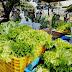 Mais de 43 mil cestas verdes começam a ser distribuídas