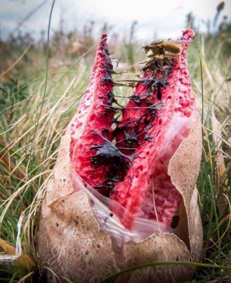 Berbagai Macam Jamur Dengan Bentuk Aneh Dan Menyeramkan