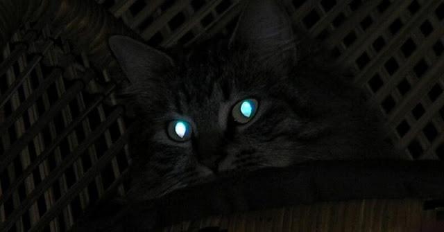 Kenapa mata kucing bisa menyala dalam gelap