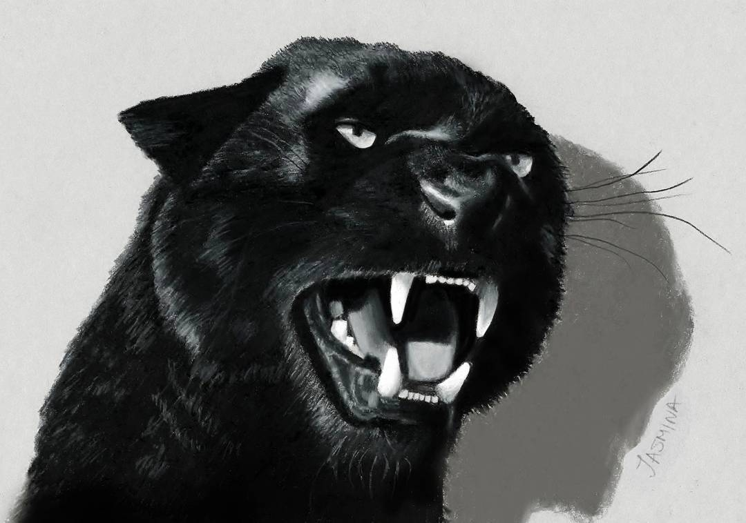 10-Black-Panther-Jasmina-Susak-Realistic-Animal-Drawings-with-Colored-Pencils-www-designstack-co
