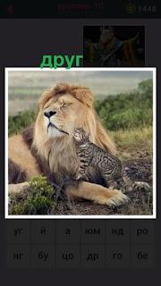 655 слов лев со своим другом кошкой вместе 10 уровень