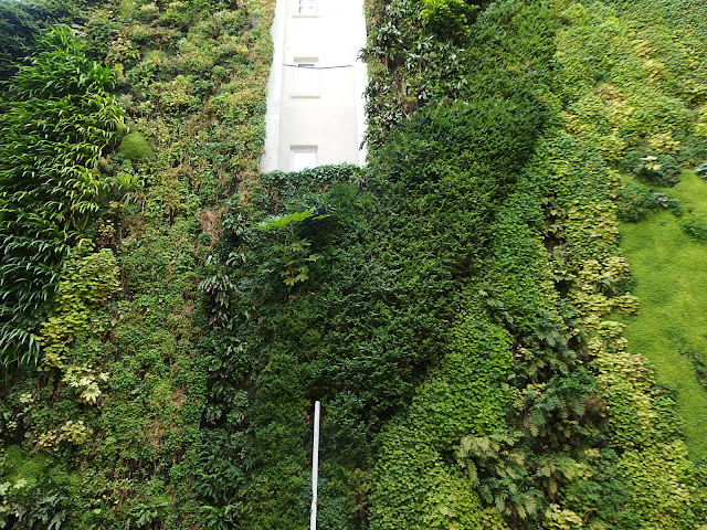 A closer view of the green wall on Rue d'Alsace