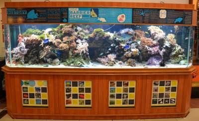 7 Amazing Aquarium Stand to Enhance Your Home Decor
