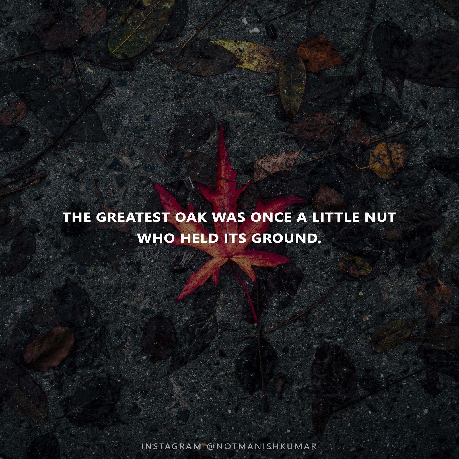Greatest-oak-quote