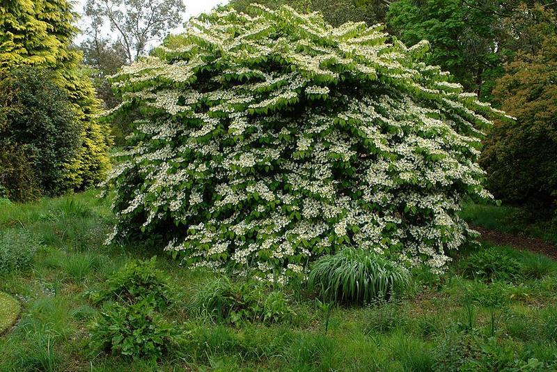 Gram neas ornamentales en el jard n knoll gardens for Gramineas ornamentales vivero
