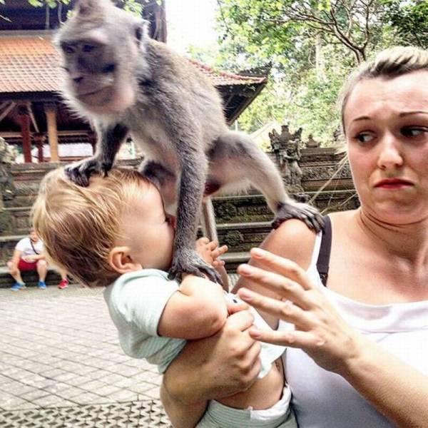 macaco fazendo macacada
