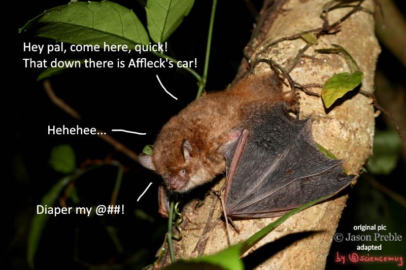 A Ryukyu tube-nosed bat on a tree