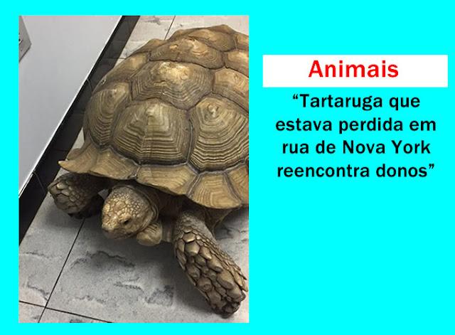 Tartaruga que estava perdida em NY reencontra donos.