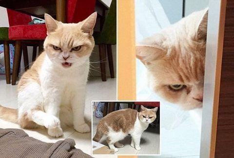 Catwoman, εσύ;;; Γάτα επιτέθηκε σε 7 σκυλια και έστειλε τον ιδιοκτήτη τους στο νοσοκομείο (PHOTOS & VIDEO)