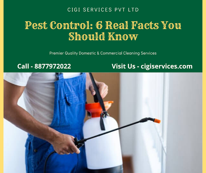 Pest Control: 6 Real Facts You Should Know