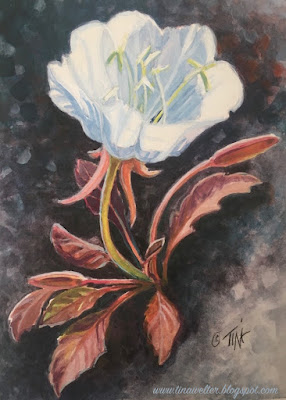 Tufted Evening Primrose, Finished painting ©2020 Tina M.Welter
