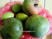 Kenali nama dan jenis  buah mangga