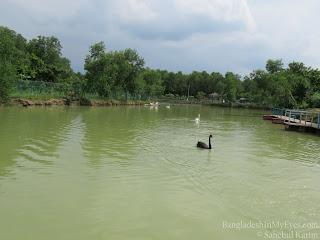 Swan in Safari Park