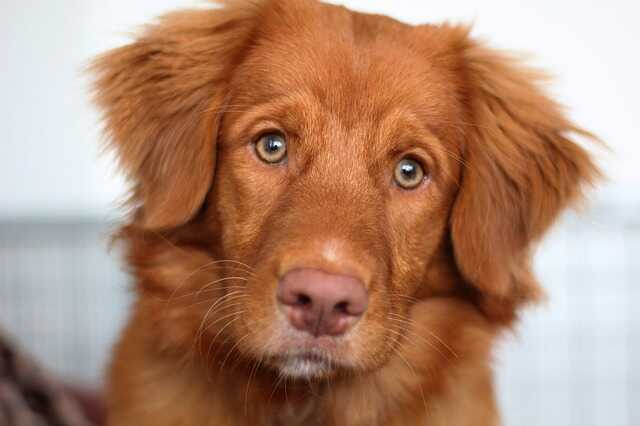 puppy images hd