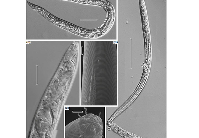 www.tinuku.com Siberian permafrost worms more than 42000 years back to life