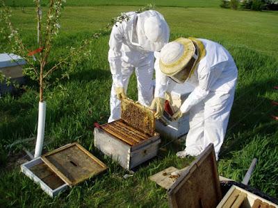 Κουιζ μελισσοκομικών γνώσεων