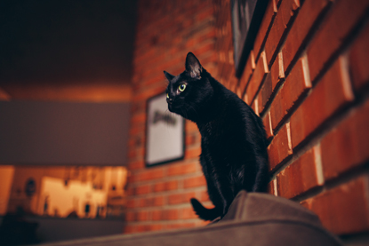 black cat sitting on back of sofa with brick wall behind