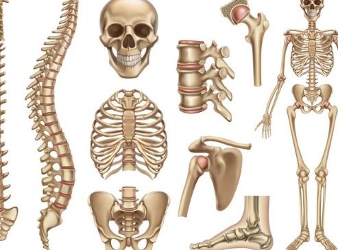 Apa Tulang