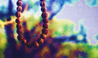 Rudraksha tree facts