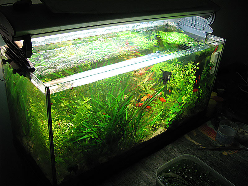 Acquarilowcost acquario senza filtro possibile for Acquario 100 litri prezzo