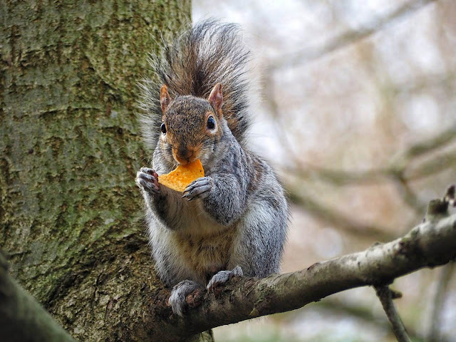 A squirle eating chips in a tree